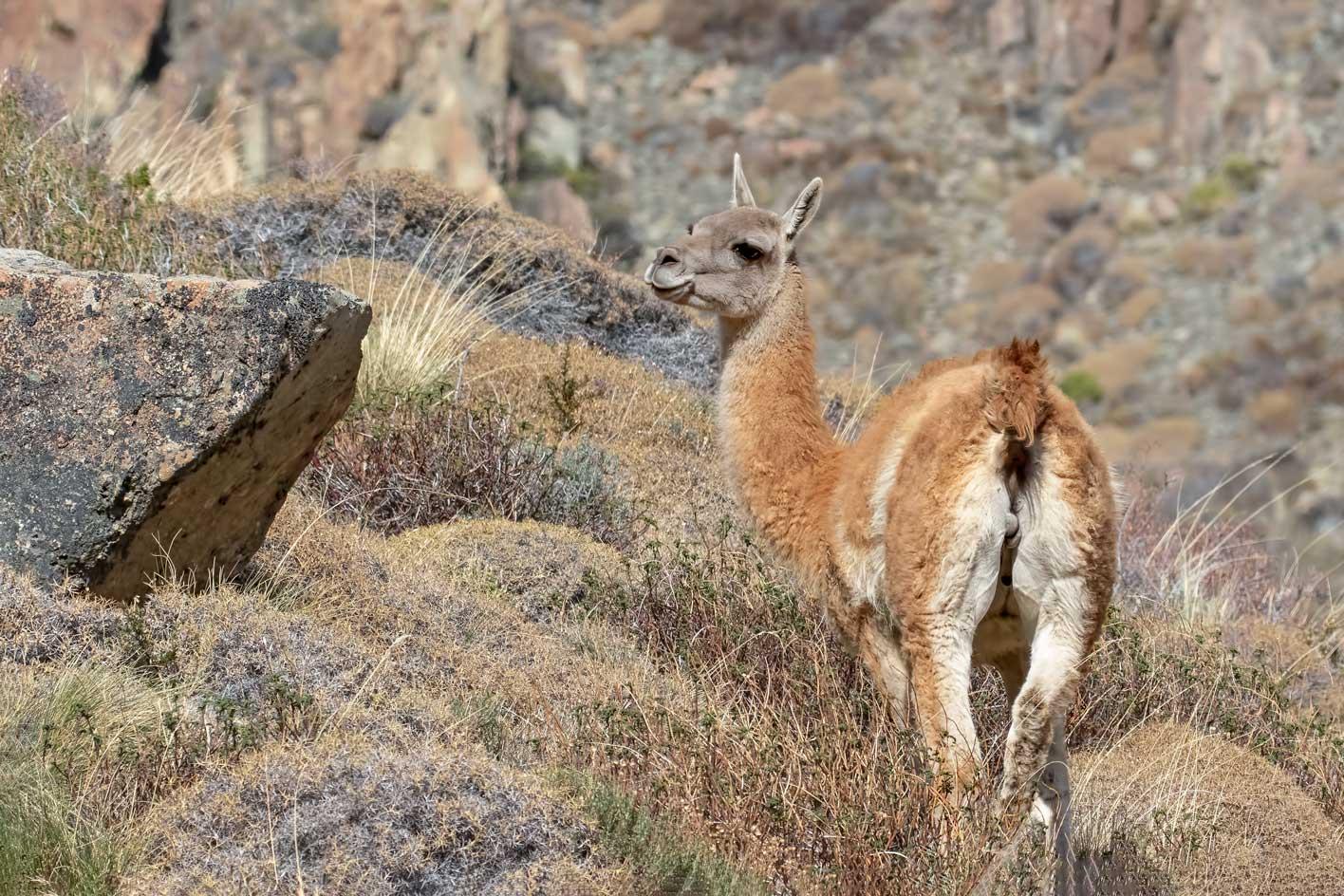 Hiking Patagonia Argentina